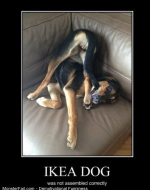 Demotivational  Motivational Ikea Dog