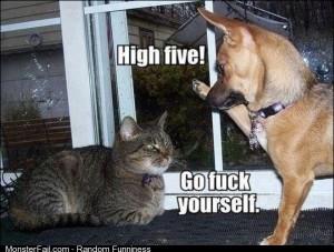 The Average Cat