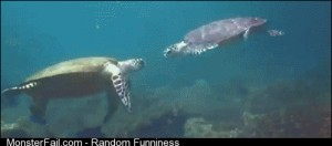 High five turtle bro