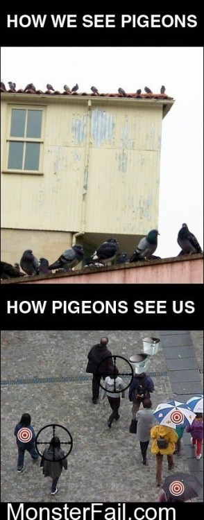 How We See Pigeons