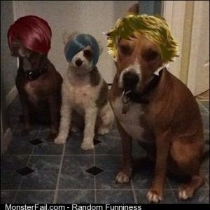 Lmao ready for the club clubbin dogs pawsome puppies cuties furbaby k9 fashion style hair wigs lol