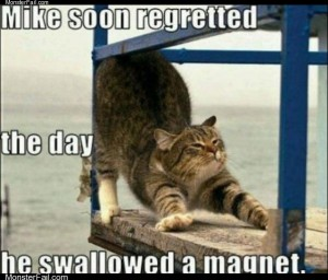 The magnet cat