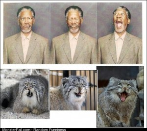 Morgan Freeman and the Manul wild cat