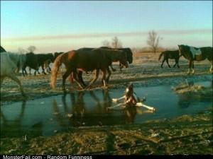 Fail horse On The Ice