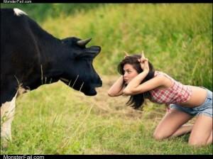Duck vs bull