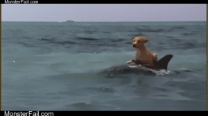 Dolphin surfing dog