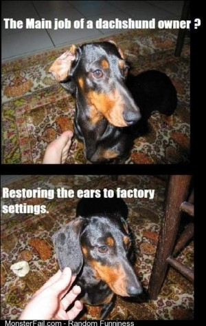 Dachshund owners will know