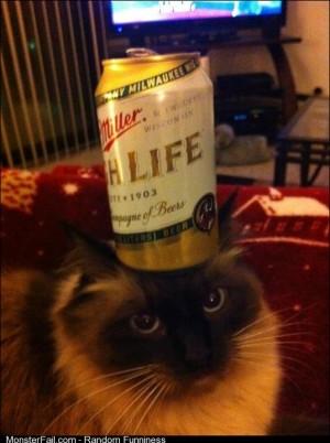 Do cat do