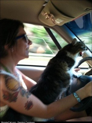 Road Rage Cat