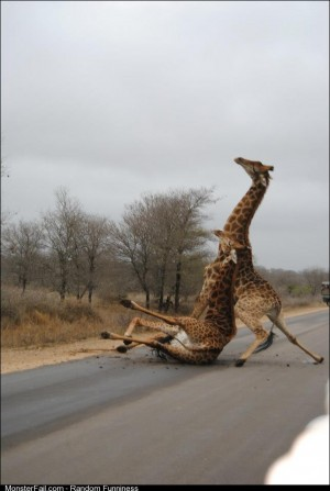 A friend is in Africa