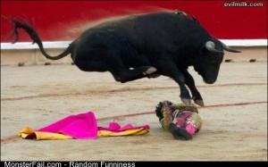 Funny Pics Bull Wins