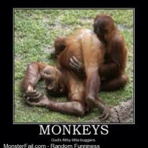 Does it smell alright IGdaily love monkeys follow me3