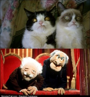 All I could think of when seeing these grumpy cats