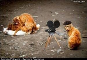 Funny Pics The Cat