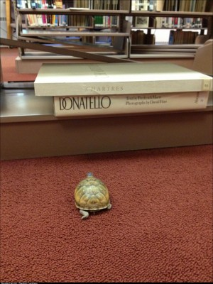 My wife is a high school librarian and one of her students lost a turtle in the library earlier in the week