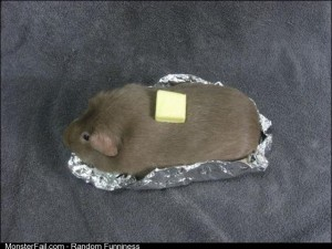 A guinea pig to be a baked potato