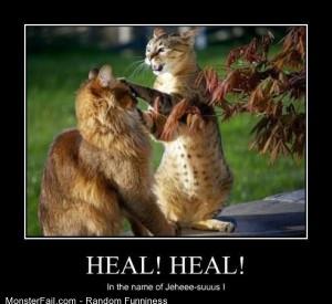 Funny Pics Healer Cat