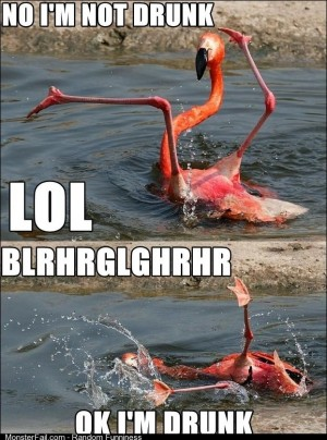 Go home flamingo