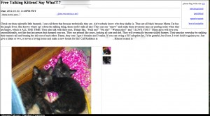 Searching for a kitten on when I came across this