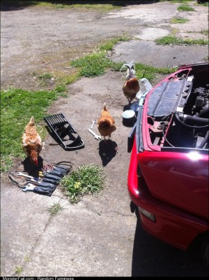 Think I found the problem it turns out my mechanics are a flock of chickens