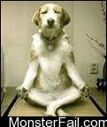 Hahaha that was funny dog doing yoga