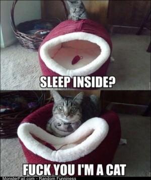 Funny Pics New Cat Bed