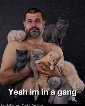 Funny Pics A Gang