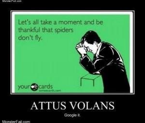 Attus volans