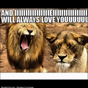 I will always love you lions dailypic l4l followme