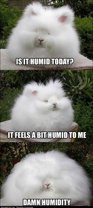 Funny Pics Is It Humid
