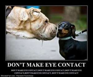 Funny Pics No Eye Contact