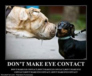 Funny Pics No Eye Contact