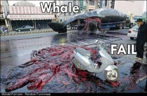 Whale fail