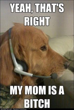 Funny Pics Xbox Live Dog