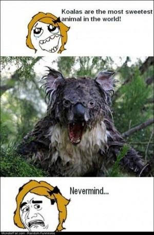 Funny Pics Koalas