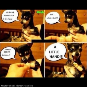 Awwww so cute adorable cute puppy humor funny doggy excited aww lol