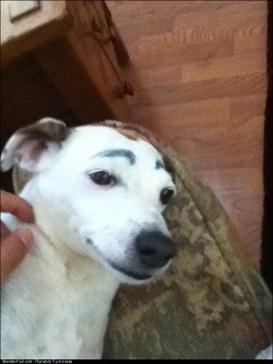 My friend has convinced me that drawing eyebrows on your dog makes is does funny