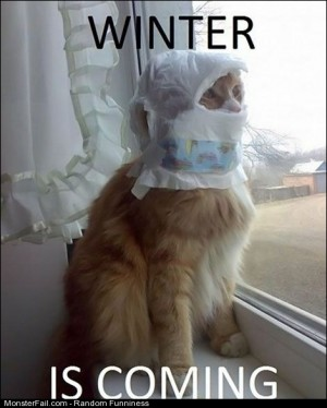 Funny Pics Winter Is Coming