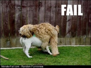 More doggy fail