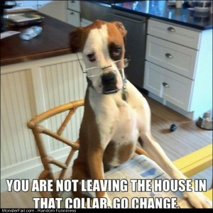 Funny Pics Not In That Collar