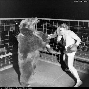 Funny Pics Bear Boxing