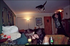 Funny Pics Cat Bombing