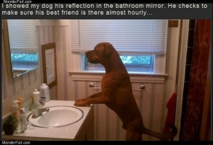 The mirror dog