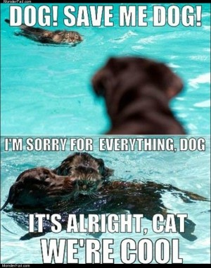 Save me dog
