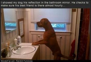 Funny Pics The Mirror Dog