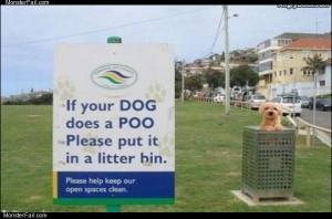 Dog did a poo
