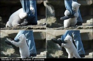 Pictures of a polar bear attack in action