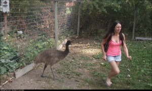 An emu walked towards my gfwho is terrified of birds