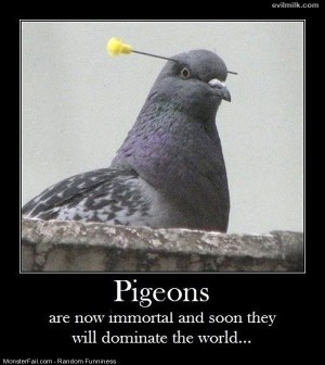 Funny Pics Pigeons