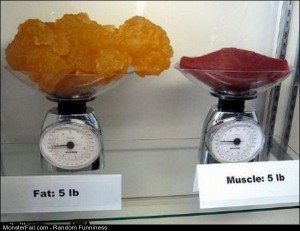 Funny Pics Fat Vs Muscle